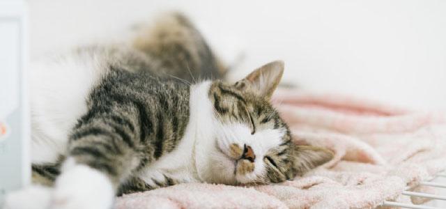 質の高い睡眠をすること イメージ