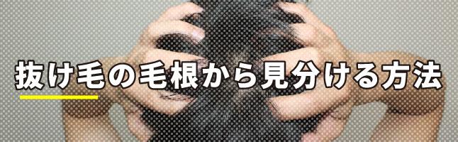 抜け毛の毛根から見分ける方法